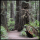 See the forest and the trees at Redwood National Park