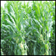 Spring rain impacts summer crops