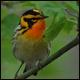 Final regulation issued on migratory birds