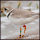 Rare piping plover nest spotted in Ohio