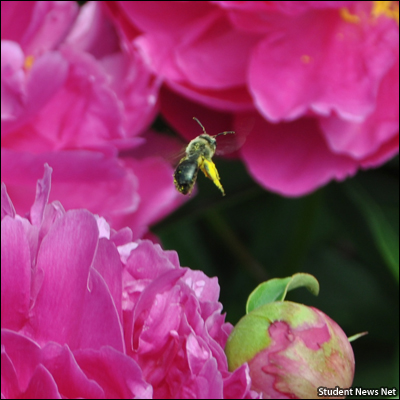 Plan and plant for pollinators